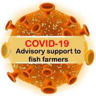 Advisory support to fish farmers